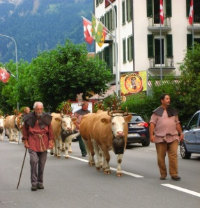 A traditional procession of cows. One of the cows became intrigued by my camera and walked into me. It's on video.
