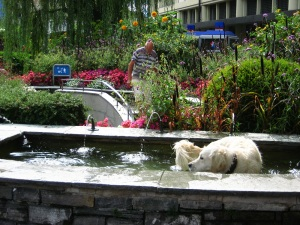 I have too many photos of dogs in fountains.