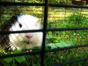 More obligatory animal photos.